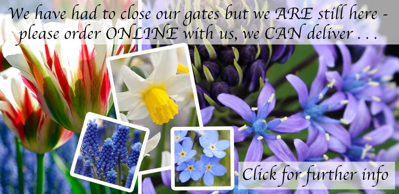 We Love Spring