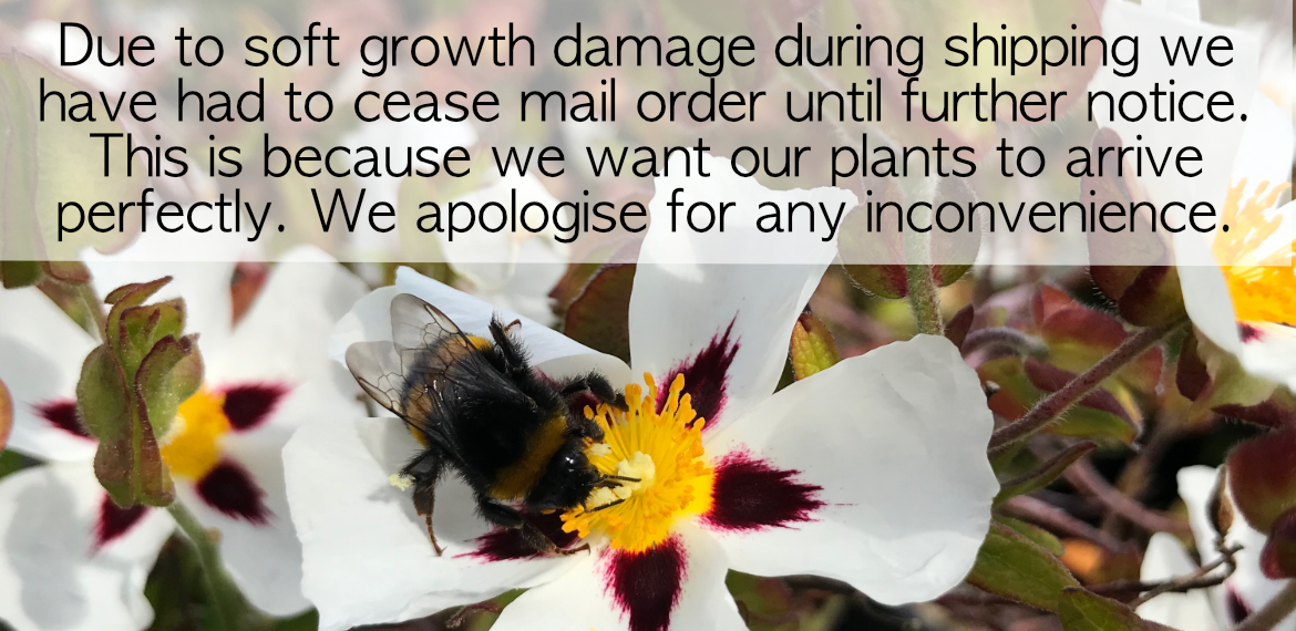 Mail Order Message