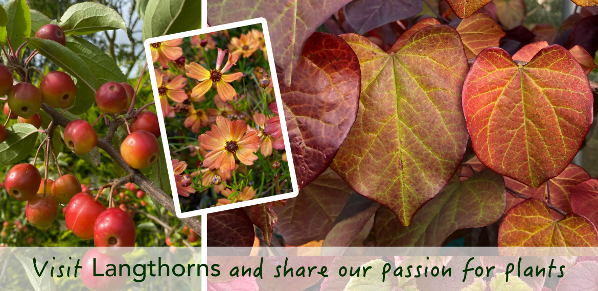 Share our passion for plants