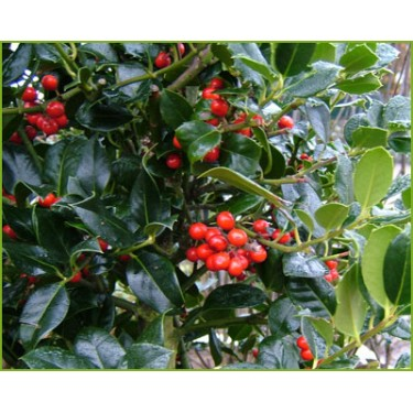 Garden Jobs in December