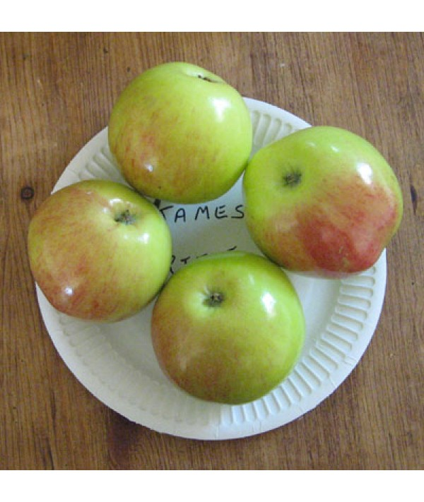 Malus domestica James Grieve (m9)
