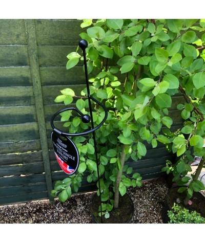 Cottage Garden Twisted Single Stem Support
