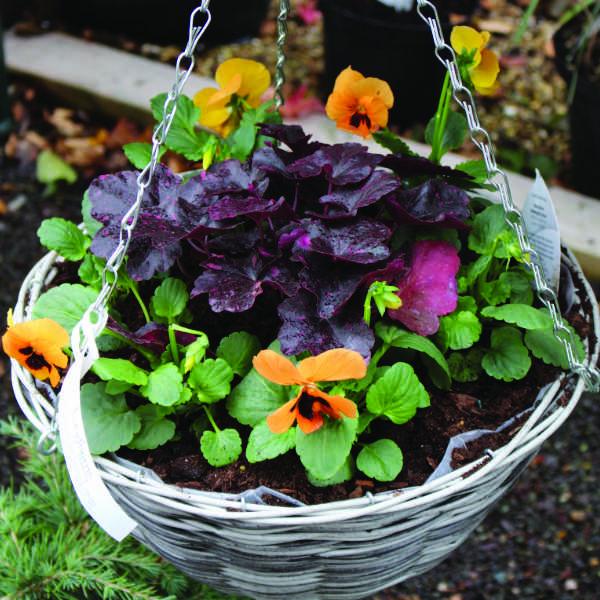 Looking ahead - Summer Hanging Baskets