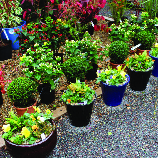 Plants for Winter Containers