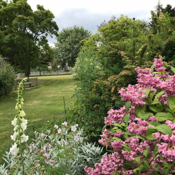 Langthorns Open Garden Weekend 4th and 5th July 2020 - CANCELLED UNTIL FURTHER NOTICE