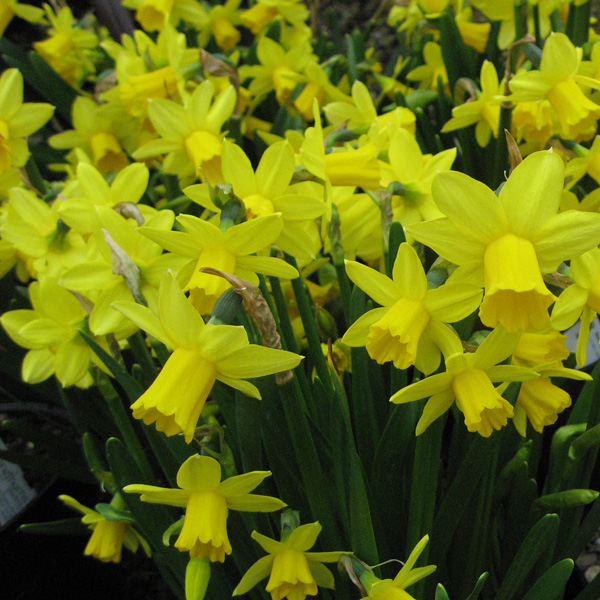 10% OFF ALL POTTED BULBS In January and February